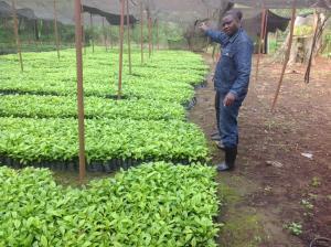 Joseph Nkandu in una piantagione di caffè